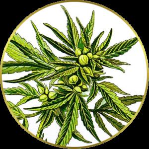 Abundant Life Seeds Logo