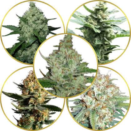 Top 5 Best Fast-Flowering Weed Strains to Grow