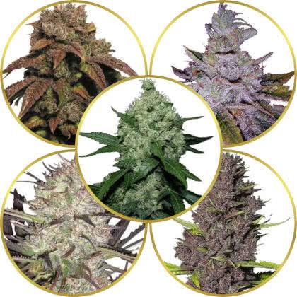 Top 5 Best Marijuana Strains to Grow Outdoors