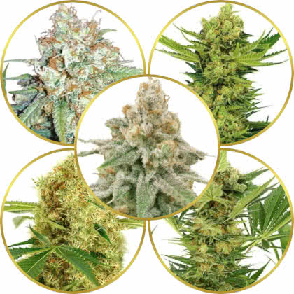 Top 5 Best-Smelling Weed Strains to Grow