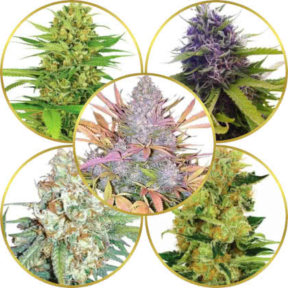 Top 5 Best Sweet Fruity Weed Strains to Grow