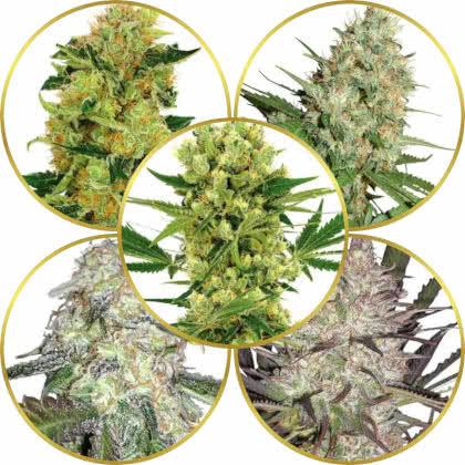 Top 5 Best Marijuana Strains to Grow in 2021